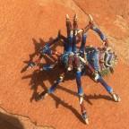 spider idol wip 2