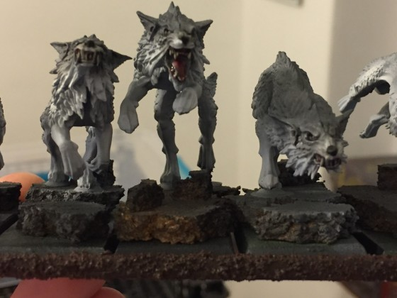 close up feral hounds
