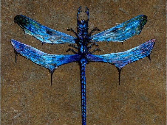 Dragonfly by Nathan Johnson