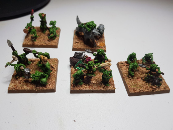 Scottish Knight Grotlings 1